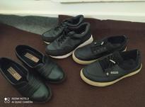 کفش سایز 39..40 در شیپور-عکس کوچک