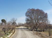 باغچه دنج زمین 450 متر در شهریار در شیپور-عکس کوچک