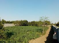 فروش یا معاوضه زمین باغی 2036 متری در جنید در شیپور-عکس کوچک
