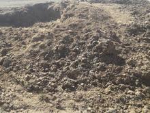 فروش کود گاوی در شیپور