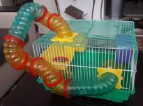 قفس همستر در حد نو در شیپور-عکس کوچک