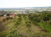 زمین باغی رو تپه با ویوی عالی در شیپور-عکس کوچک