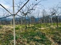 فروش زمین باغ میوه 15000 متر در پستک در شیپور-عکس کوچک