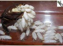 سمپاشی موریانه زدایی سم پاشی تضمینی در شیپور-عکس کوچک