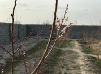 فروش زمین باغچه چهاردیواری 350 متر در شیپور-عکس کوچک