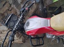 ام کی زد شکاری در شیپور-عکس کوچک
