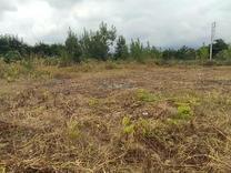 فروش زمین مسکونی 1000 متر در آمل در شیپور