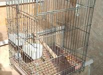 قفس طوطی محکم و زخیم  در شیپور-عکس کوچک
