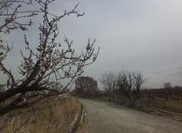 باغچه 450 متر زمین پشت بر سنددار در شیپور-عکس کوچک