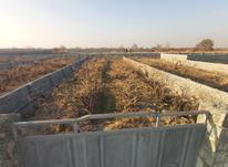 فروش زمین 450 متر در رباط کریم در شیپور-عکس کوچک