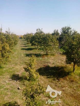 فروش زمین 2400 متر در آمل در گروه خرید و فروش املاک در مازندران در شیپور-عکس2