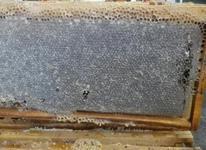 عسل طبیعی و دارویی در شیپور-عکس کوچک
