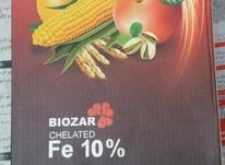 فروش مقداری کوداسپانیایی شرکت بویذر در شیپور-عکس کوچک