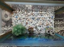 آکواریوم شیشه ای در شیپور-عکس کوچک