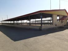 گاوداری صنعتی 1400راسی استان البرز در شیپور