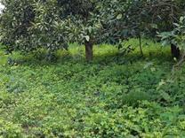 فروش زمین مسکونی 250 متر در رامسر در شیپور