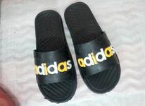 کفش نو عمده در شیپور-عکس کوچک