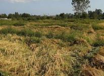 فروش زمین زراعی در شیپور-عکس کوچک