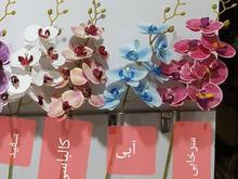 ارکیده چرمی 7 گل بلند در شیپور