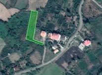 1500مترمربع زمین با کاربری باغی.رودسر در شیپور-عکس کوچک