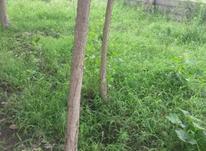 274مترمربع زمین با کاربری مسکونی رودسر. در شیپور-عکس کوچک