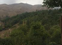 1000متر زمین ویلایی رودهن تجرک در شیپور-عکس کوچک