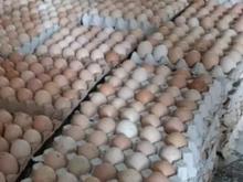 فروش تخم مرغ محلی زیر قیمت بازار در شیپور