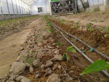 دو هزار متر گلخانه صنعتی با تمامی امکانات در شیپور