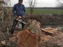 خریدار چوب در شیپور-عکس کوچک