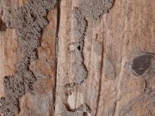 سمپاشی موریانه،سم پاشی تضمینی در شیپور