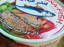 تن ماهی بندر عباس...  در شیپور-عکس کوچک