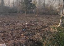 500 متر زمین مسکونی در شیرکوه چهارده در شیپور-عکس کوچک