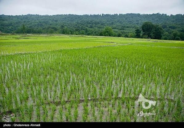 زمین کشاورزی در گروه خرید و فروش املاک در مازندران در شیپور-عکس4