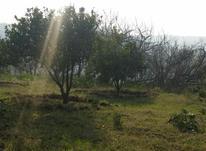 فروش زمین 2100 متر در قائم شهر در شیپور-عکس کوچک