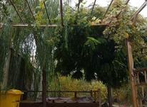 باغچه ویلایی 500متری در تهرانویلا در شیپور-عکس کوچک
