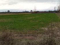 زمین کشاورزی با قابلیت تبدیل به باغ 1700 متر در آمل در شیپور
