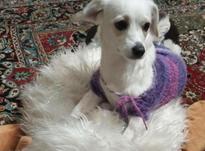 گمشده در امیریه و بیمار تحت معالجه پزشگ بوده در شیپور-عکس کوچک