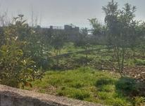فروش باغ 1000 متر داخل بافت در آمل در شیپور-عکس کوچک