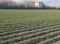 زمین کشاورزی 3000 متر در نظرآباد قوچ حصار  در شیپور-عکس کوچک