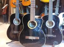 گیتار رزوود  در شیپور-عکس کوچک