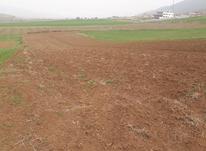 نیم هکتار زمین کشاورزی مرزبن ،پایین دست روستا در شیپور-عکس کوچک