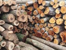 فروش چوب توسکا و اوجا در شیپور
