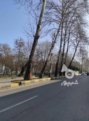 کلنگی 330 متری محدوده دهخدا نوشهر در گروه خرید و فروش املاک در مازندران در شیپور-عکس1