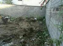 فروش زمین مسکونی 314 متر در نخست وزیری بابلسر در شیپور-عکس کوچک
