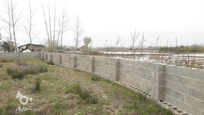 زمین مسکونی 320 متری روستایی با مجوز بنیاد صومعه سرا در گروه خرید و فروش املاک در گیلان در شیپور-عکس3