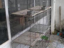 4تا قفس جوجه پرون تاشو در شیپور