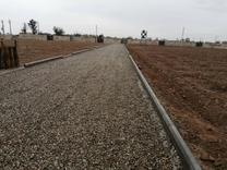 زمین سند تک برگ  در شیپور