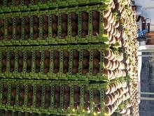 9 تن کیوی در سردخانه در شیپور