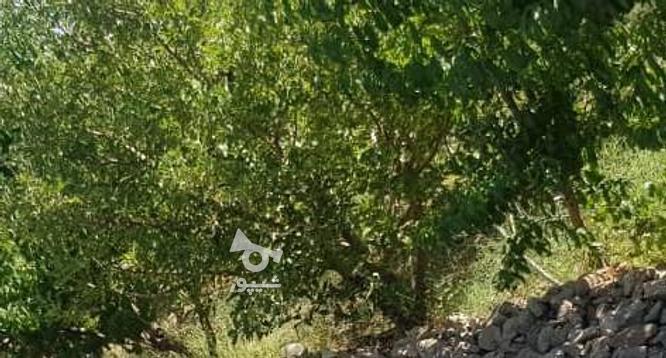 فروش باغچه ویلایی 500 متر در جابان در گروه خرید و فروش املاک در تهران در شیپور-عکس3