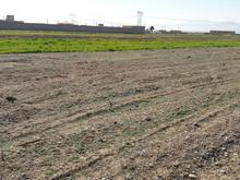 زمین باغی برای ساخت ویلا در شیپور